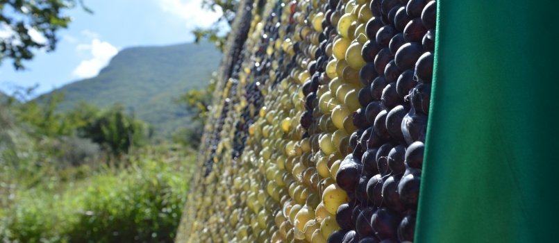 Festa dell'Uva
