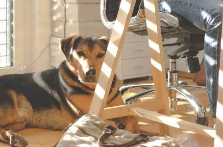 """In ufficio con il cane: il Comune di Greve in Chianti diventa """"pet friendly"""""""