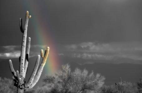 """""""Saguaro"""""""
