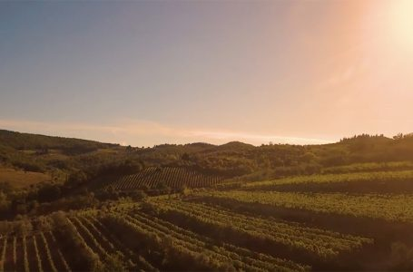 VIDEO / Il Chianti tornerà presto a risplendere