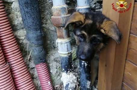 Vigili del Fuoco in azione: salvato un cucciolo di cane rimasto incastrato