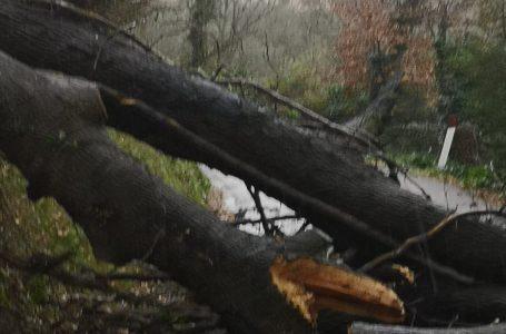 Maltempo, prime disavventure sul territorio ripolese: cede una grossa quercia, viabilità bloccata