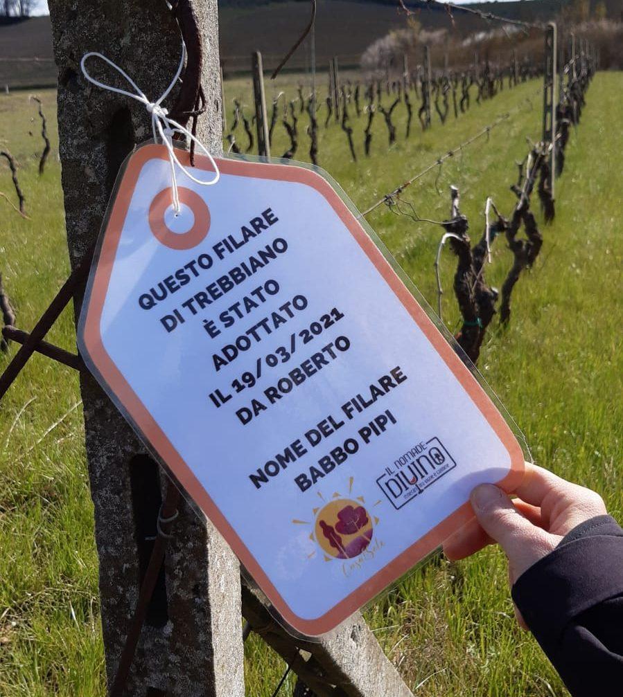 """""""Adotta un filare"""": l'iniziativa dell'Azienda Agricola Casalsole per far rinascere il settore vitivinicolo!"""