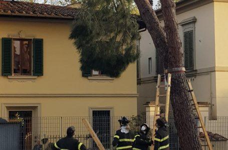 Antella, grosso ramo in bilico alla scuola S.Maria: intervento straordinario dei Vigili del Fuoco