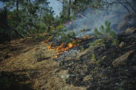 Impruneta, Carabinieri Forestali denunciano due operai per un incendio boschivo
