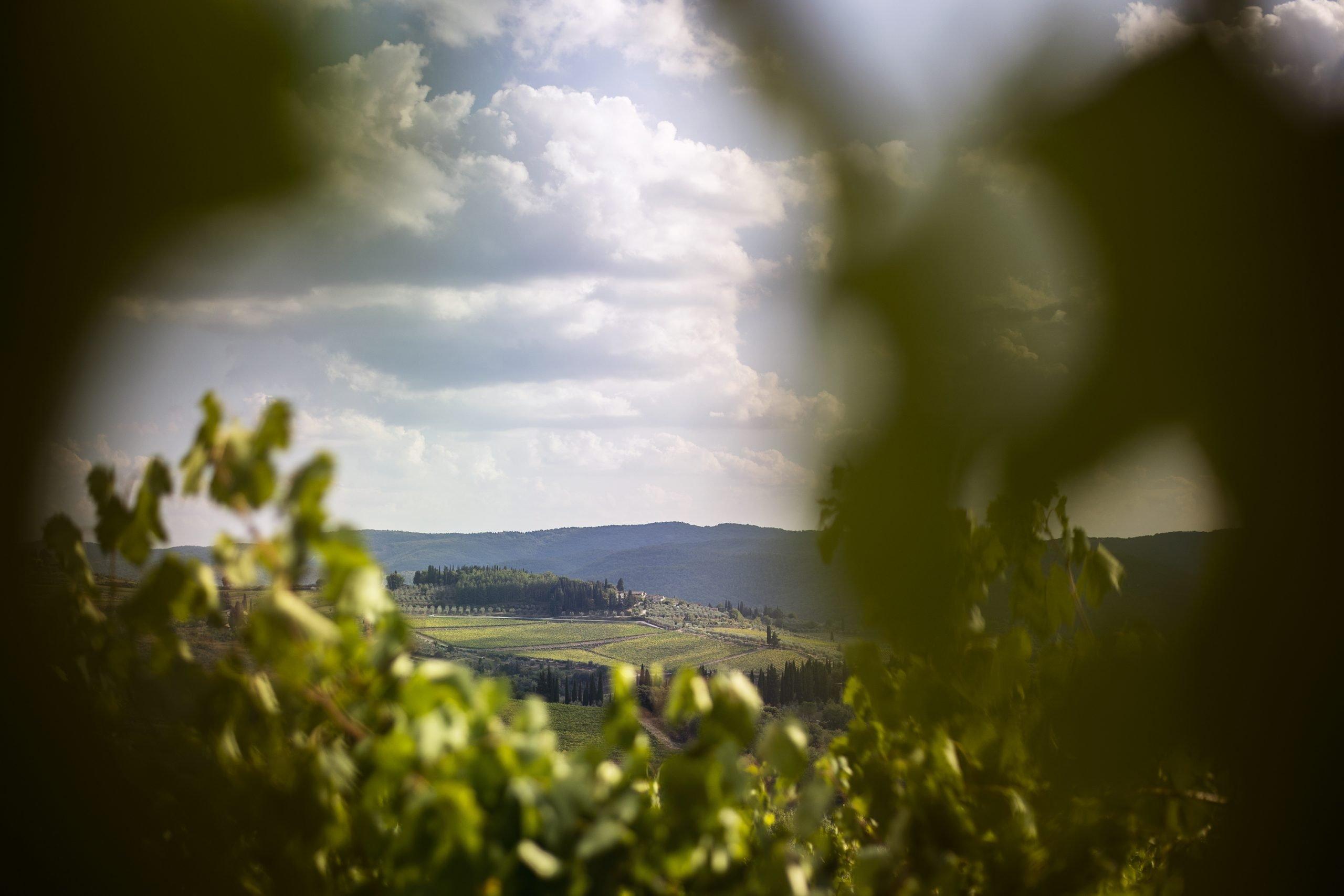 Camminare tra gli ulivi nel Chianti: i percorsi proposti da Greve, Barberino Tavarnelle e San Casciano